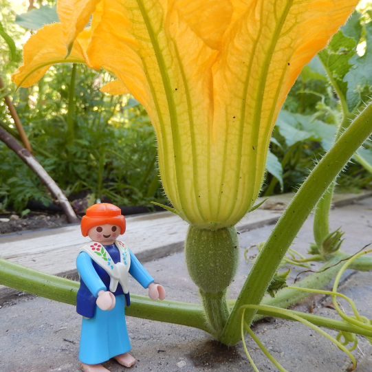 female pumpkin flower