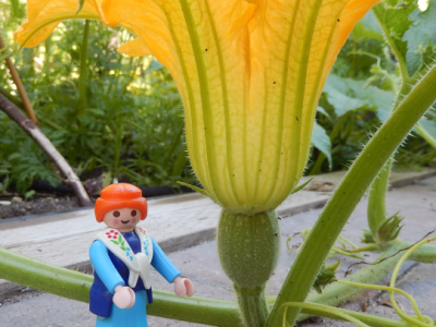 female pumpkin flower